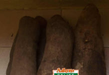 The new yam comes from June to December