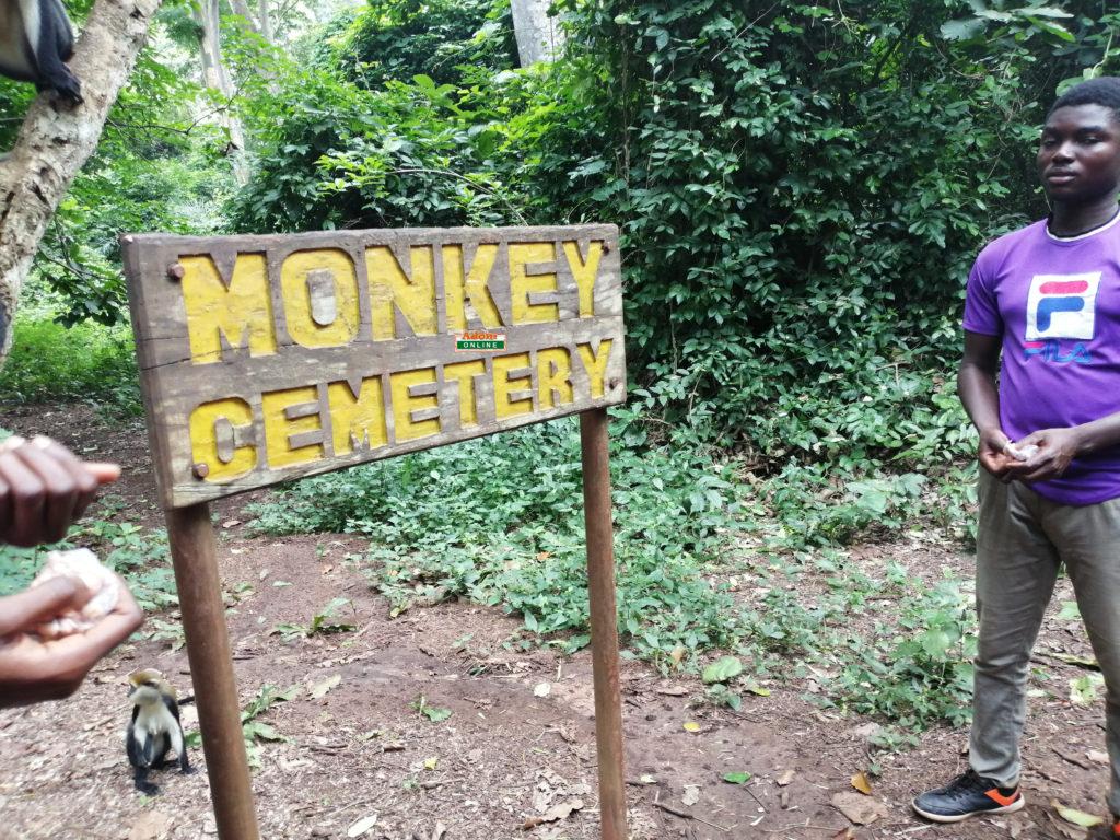 monkey santuary