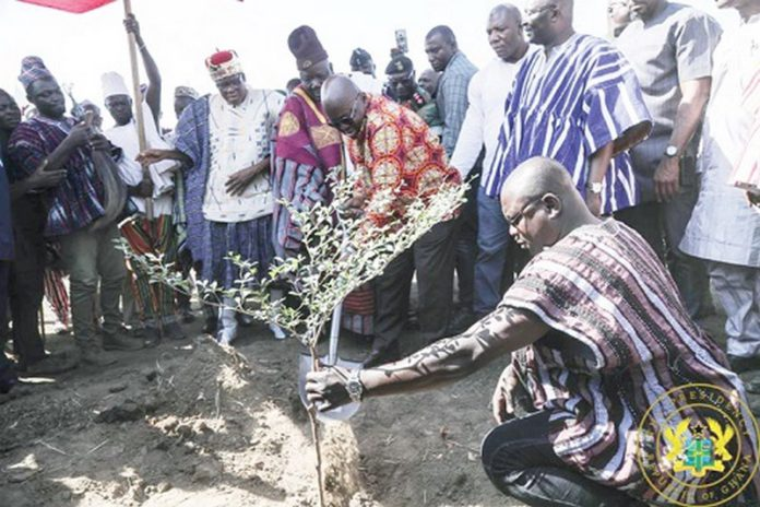 President Akufo-Addo (with a shovel) planting a tree for commencement of work on the Pwalugu Multipurpose Dam