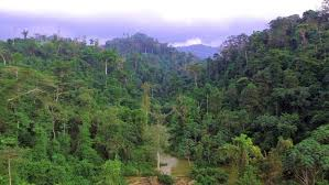 Atewa forest, where Ghana's 960 million metric tonnes of bauxite can be found