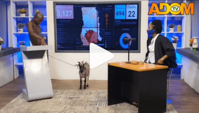 AY Poloo brings a goat live on Adom TV's Badwam Ahosepe show with Sister Sandy