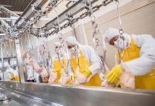 coronavirus meat factory