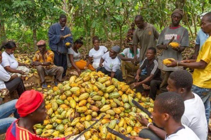 coca farmers