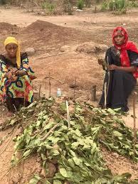 PHOTOS: Hearbreak as 2 daughters of Sheikh ALI Kalamu Maikano 'cry' at his  graveside